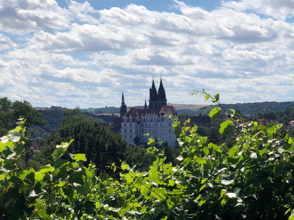 Weinberg mit Blick auf Schloss und Kirche von Meißen