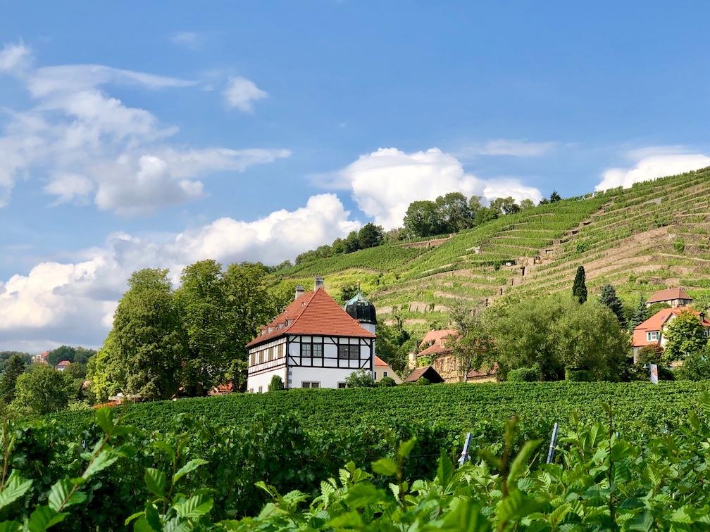 Radebeul: Jahrhundertealte Trockenmauern speichern die Wärme in den Weinbergen.